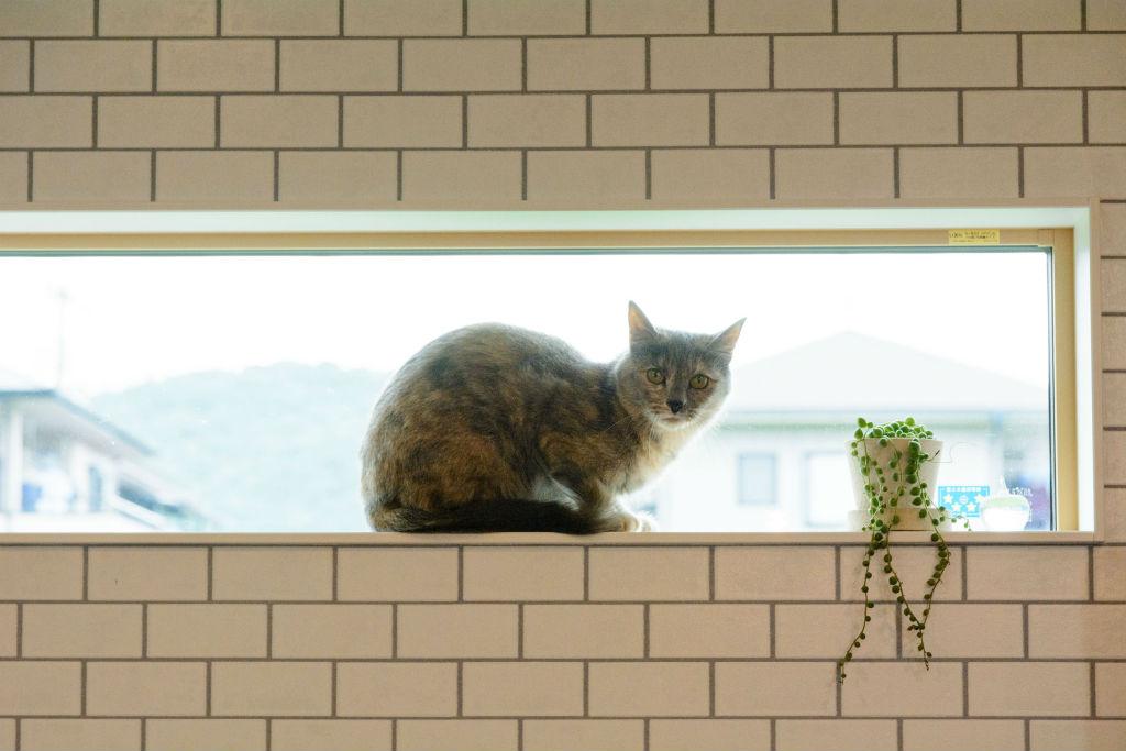 cozy style・窓辺の猫